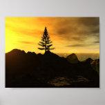 Pine Tree Posters