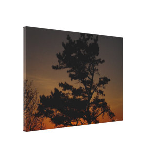 Pine tree sunset Stretched Canvas Print