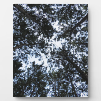 Pine Tree Top Forest Plaques