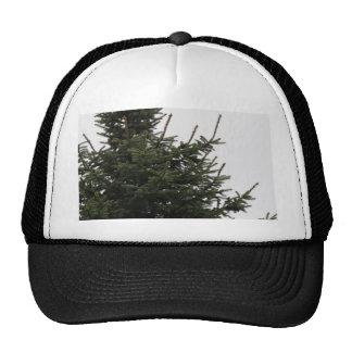 Pine Tree Top Trucker Hat