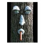 pine tree with hot dog postcard