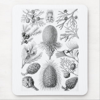 Pine trees mouse pad