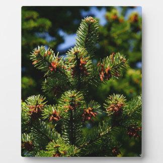 Pine trees plaque