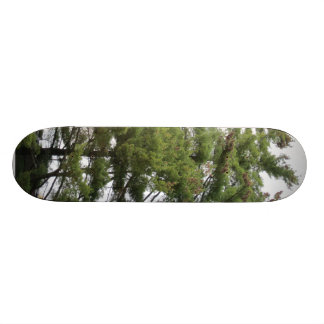 Pine Trees Skateboard