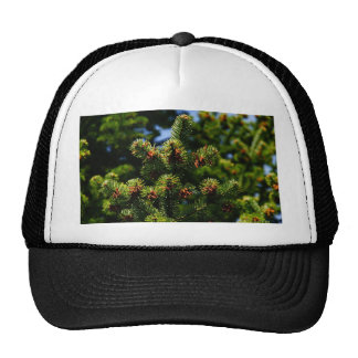 Pine trees trucker hat