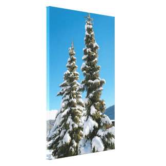 Pine trees under the Snow Canvas Print