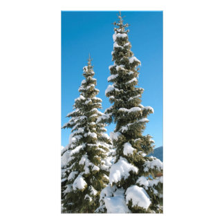 Pine trees under the Snow Card