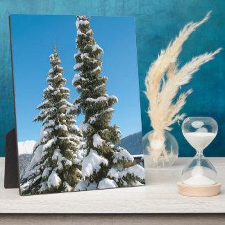 Pine trees under the Snow Plaque