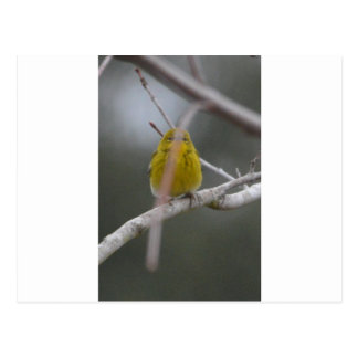 Pine Warbler Bird Nature I'm Hiding Postcard