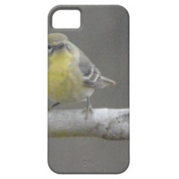 Pine Warbler Bird Nature iPhone SE/5/5s Case