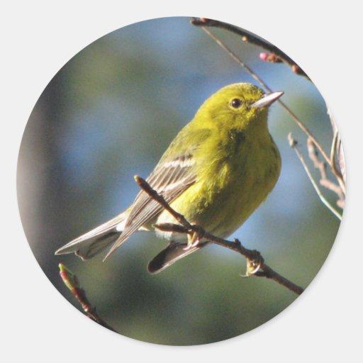 Pine Warbler in Cherry Classic Round Sticker