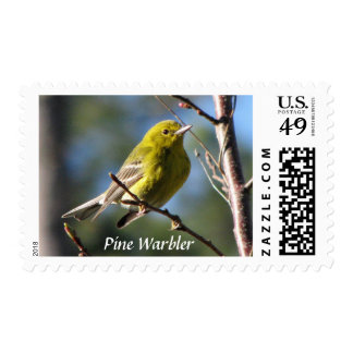 Pine Warbler in Cherry Stamp