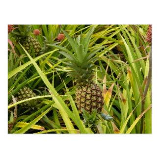 Pineapple Babies Postcard