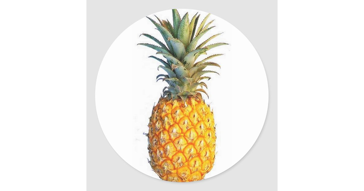 pineapple classic round sticker zazzle. Black Bedroom Furniture Sets. Home Design Ideas