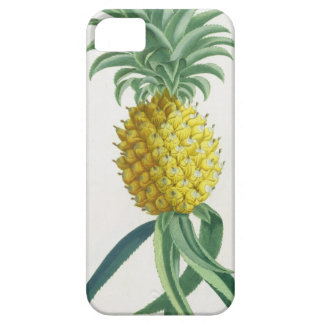 Pineapple engraved by Johann Jakob Haid (1704-67) iPhone SE/5/5s Case