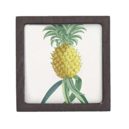 Pineapple engraved by Johann Jakob Haid (1704-67) Keepsake Box