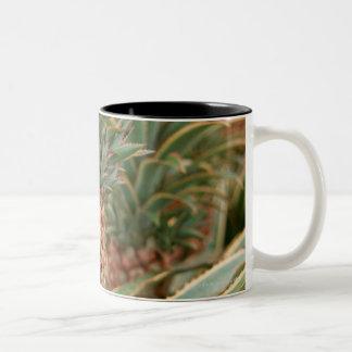 Pineapple Field Coffee Mugs