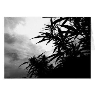 Pineapple Grove Greeting Card