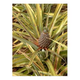 Pineapple in Paradise Postcard