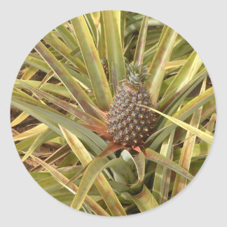 Pineapple in Paradise Sticker