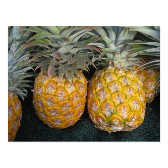 Pineapple Paradise Postcard