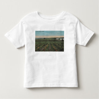 Pineapple Plantation Ready for Harvest in Florid Shirt