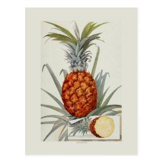 Pineapple Postcard