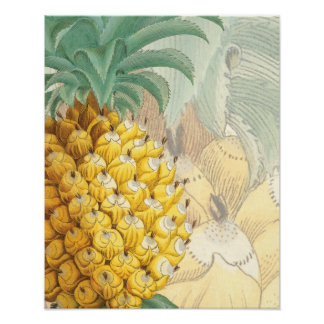 Pineapple with enlargement poster