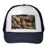 Pineapples, Tulum, Mexico Hat