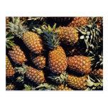 Pineapples, Tulum, Mexico Postcards