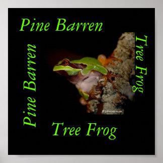 pinebarrentf10, rana arbórea, pino estéril, vagos  póster