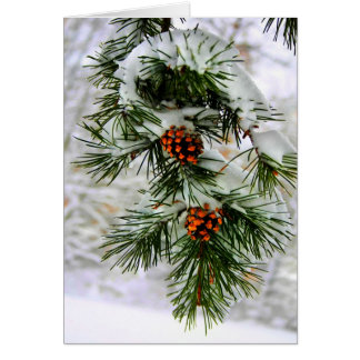 PineCone BranchHD Cards