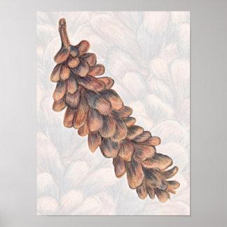 Pinecone Drawing Art Print Poster