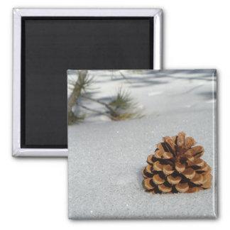 Pinecone en el imán de la nieve