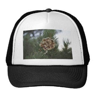 pinecone trucker hat