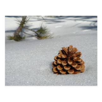 Pinecone on the Snow Postcard