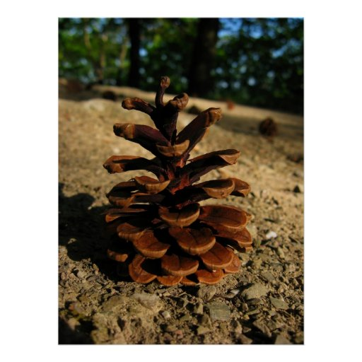 pinecone posters