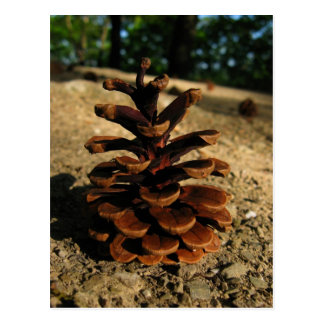 pinecone tarjeta postal