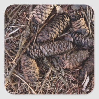 Pinecones and Pine Needles on Forest Floor Square Sticker