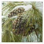 Pinecones en teja de la nieve