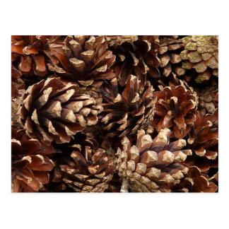 pinecones, por todas partes tarjeta postal