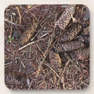 Pinecones y agujas del pino en piso del bosque posavasos