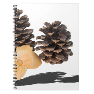 PineconesDriedFlower061315.png Notebook