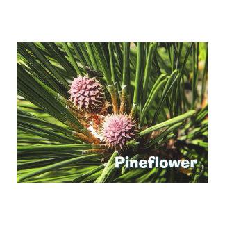 Pineflower Canvas Print