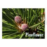 Pineflower Felicitacion