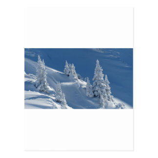 Pines Covered with Snow Postcard