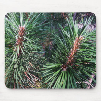 Pines of Summer Mouse Pad