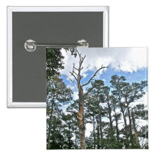 Pines on Beach Nature Trail OBX NC Pinback Button