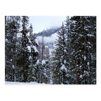 Pines postcard