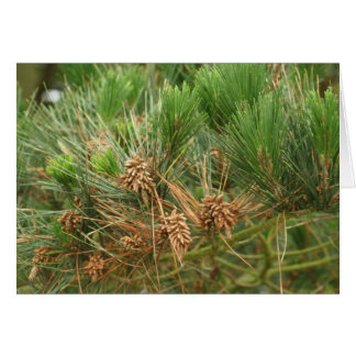 pinetree card